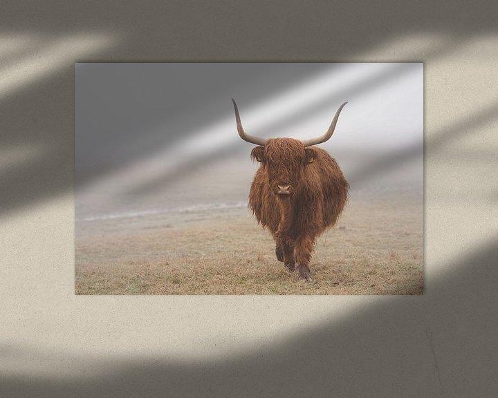 Sfeerimpressie: Schotse hooglander in de wei in Wassenaar van Joyce van Galen