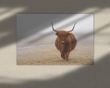 Schotse hooglander in de wei in Wassenaar van Joyce van Galen
