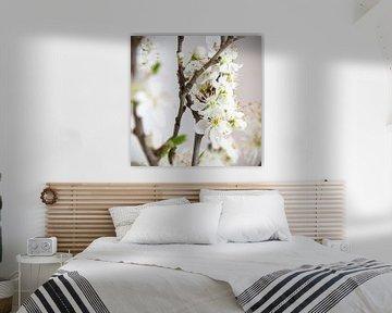 Witte bloesem voor lichte achtergrond - vierkant van Ton van Waard - Pro-Moois