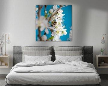 Witte bloesem voor blauwe achtergrond - vierkant van Ton van Waard - Pro-Moois