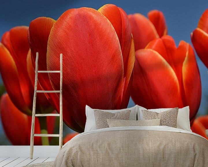 Sfeerimpressie behang: Tulpen in de Bollenstreek van JTravel