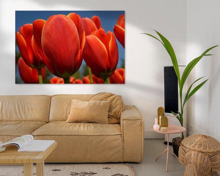 Sfeerimpressie: Tulpen in de Bollenstreek van JTravel