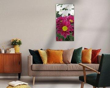 Chrysantbloem von Marcio Leite