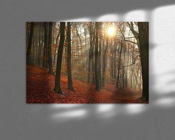 Beukenbomen en zonnestralen in de herfst van Maarten Pietersma