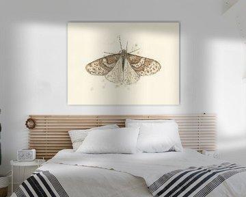 Grote Wintervlinder van Marieke Nelissen