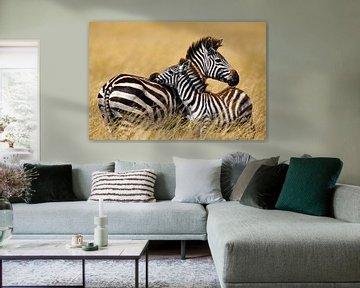 Burchell zebra met kind van Peter Michel