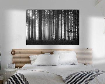 Het donkere mistige sparrenbos