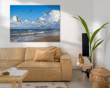 Zeemeeuwen op het strand van Sankt Peter-Ording van Animaflora PicsStock