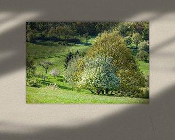 Arbres de printemps dans le Taunus près d'Engenhahn sur Christian Müringer