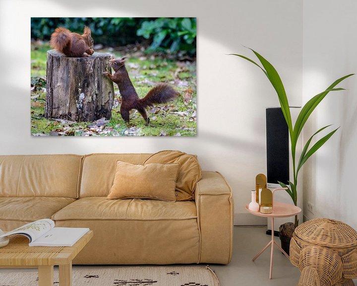 Beispiel: Eichhörnchen im Garten von Marlies Gerritsen