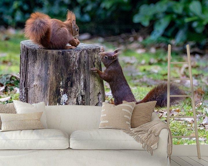 Beispiel fototapete: Eichhörnchen im Garten von Marlies Gerritsen
