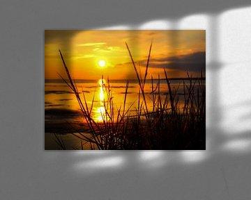 Duingras in de Waddenzee op het strand aan de Noordzee van Animaflora PicsStock