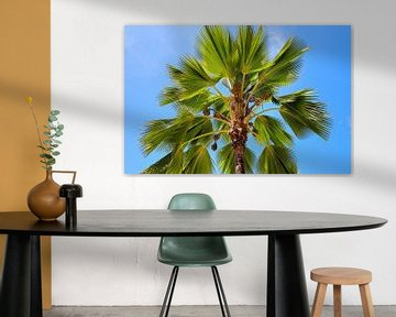 Tropische palmboom tegen blauwe hemel