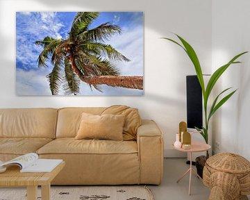 Tropische palmboom voor een zomerse hemel