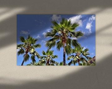 Viele tropische Palmen vor blauem Himmel von MPfoto71