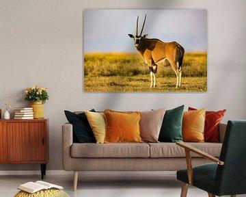 Oryx antilope van Peter Michel