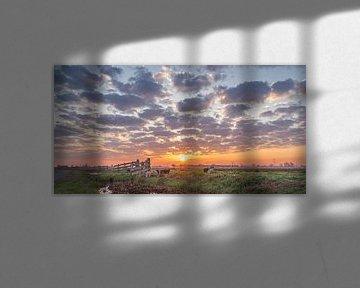 Schapen tijdens Zonsopkomst tussen de schapenwolken in het polderlandschap van Rossum-Fotografie