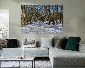 Sneeuw in de Amsterdamse Waterleidingduinen