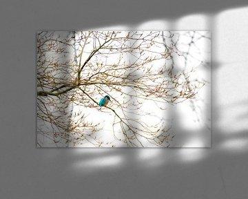 IJsvogel van Fotojeanique .