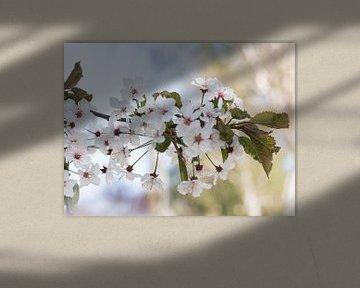 Weiße Blüte von Goudrandje