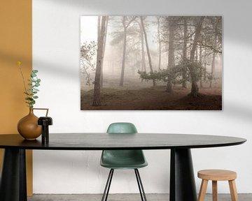 Brouillard dans les forêts de Drentse sur P Kuipers