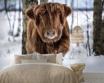 Schotse Hooglander in de sneeuw van Durk-jan Veenstra