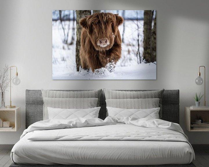 Sfeerimpressie: Schotse Hooglander in de sneeuw van Durk-jan Veenstra