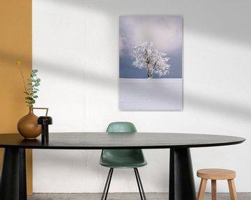 Einsamer Baum in einer Winterlandschaft
