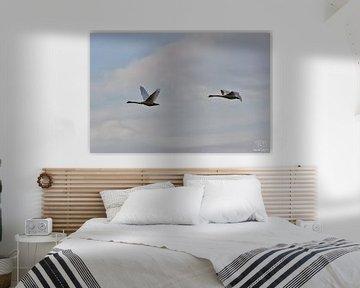 Vliegende ganzen van Alia Maximus