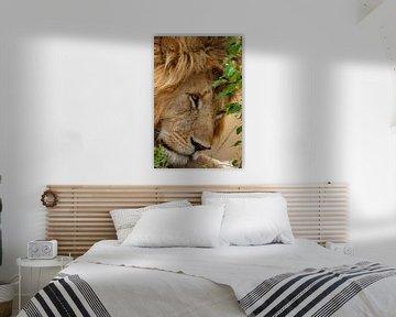 slaperige leeuw van Peter Michel