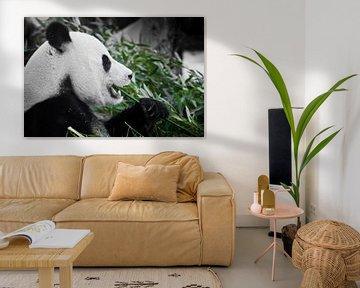 Fröhlicher Panda mit Appetit frisst Grünzeug, ein Symbol für eine pflanzliche Ernährung, im Profil von Michael Semenov