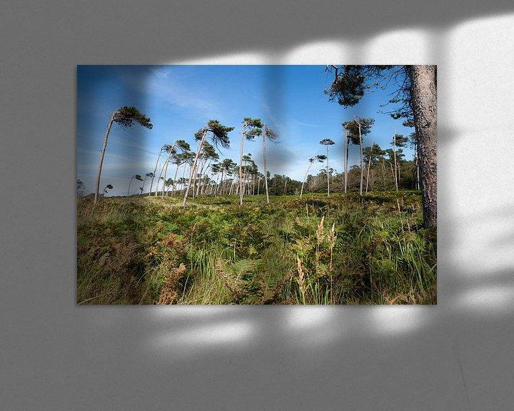 Beispiel: Ostsee (Darß - Weststrand): Landschaft hinter den Dünen von t.ART