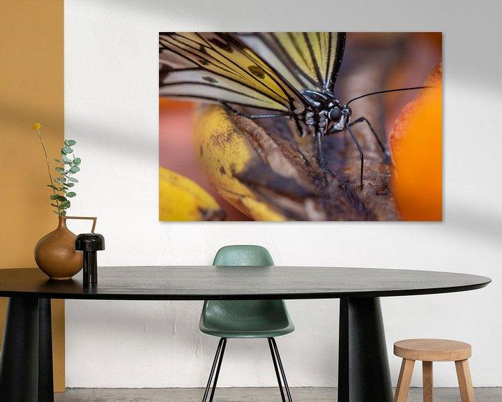 Sfeerimpressie: Close up vlinder op een blad van Ron Jobing