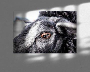 Schaf von Marfa