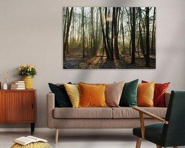 Een mooie winterdag in het bos in Bergen op Zoom van Sabina Meerman