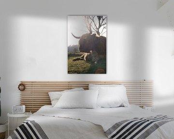 Schotse Hooglander in de lentezon van Thom Brouwer