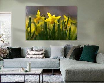 Narcis bloemen brengen de vroege lente van Kim Willems