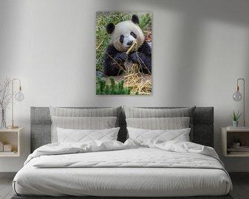 Panda von Heiko Lehmann