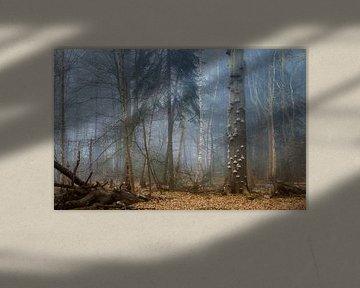 Neblige Waldlandschaft