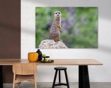 Meerkat van Heiko Lehmann