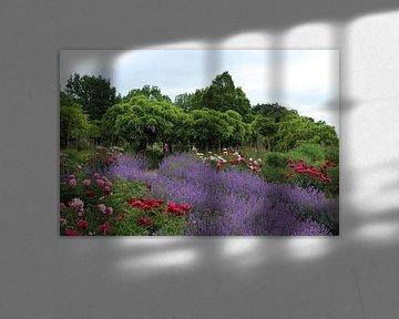 Frühling im Arboretum von Christiane Schulze
