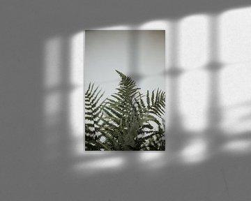 Varens voor een witte muur | Minimalistische fotografie | Amersfoort, Nederland van Trix Leeflang