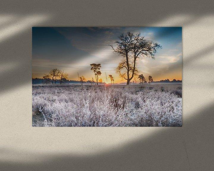 Sfeerimpressie: Bevroren heide van Mark Bolijn