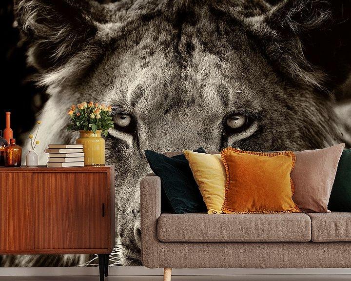 Beispiel fototapete: Porträt eines jungen männlichen Löwen. von Louis en Astrid Drent Fotografie