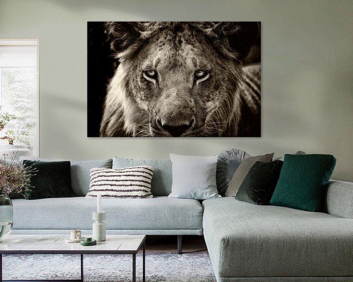 Beispiel: Porträt eines jungen männlichen Löwen. von Louis en Astrid Drent Fotografie