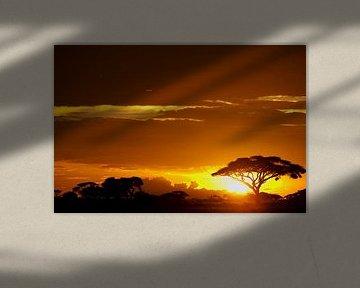 Zonsondergang in de bush van Amboseli NP., Kenia, Afrika van Louis en Astrid Drent Fotografie