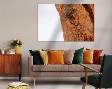 Gros plan d'une tête d'éléphant, rouge de la terre.