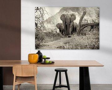 Jonge Afrikaanse Olifanten in Tsavo-East, Kenia. van Louis en Astrid Drent Fotografie