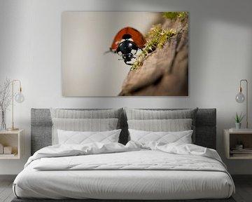 Nahaufnahme eines Marienkäfers. von Louis en Astrid Drent Fotografie