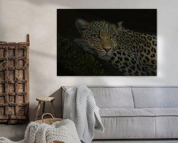 Panther (Leopard) auf Baumstamm in der Nacht von Gert Hilbink